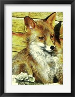 Framed Portrait of an Urban Fox