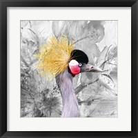 Framed Crest Bird