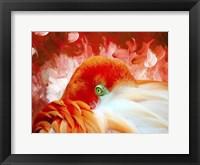 Framed Red Flamigo