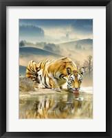 Framed Tiger Drinking Water