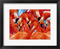 Framed Red Flamingo Family