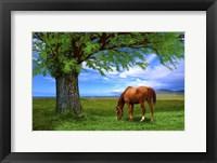 Framed Nature S21
