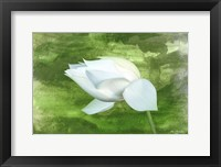 Framed White Lotus