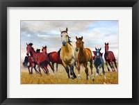 Framed Wild Horses In Nature