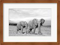 Framed Elephant Mother