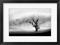 Framed Lone Tree And Birds