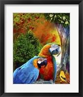 Framed Parrot Love 3