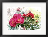 Framed Roses Are Beautiful