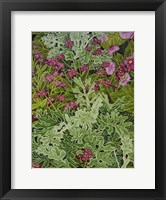 Framed Dusty Miller with Pinks