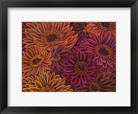 Framed Gerbera Orange Red