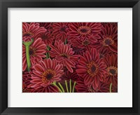 Framed Gerbera Ruby