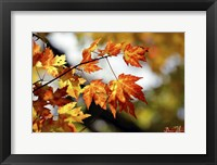 Framed Fall Colors