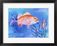 Framed Red Fish Sea Life