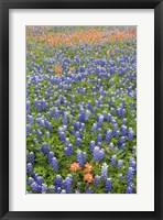 Framed Bluebonnet and Indian Paintbrush