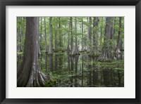 Framed In the Swamp