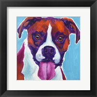 Framed Boxer - Lucy