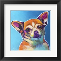 Framed Chihuahua - Starr