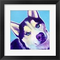 Framed Husky - Dico