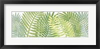 Framed Palms 5 F