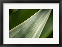 Framed Agave Abstract 1