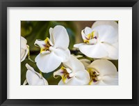 Framed Exotic Orchid 02