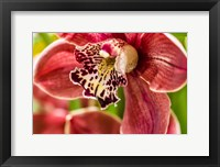 Framed Exotic Orchid 03