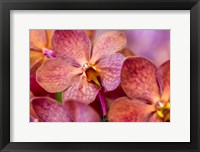 Framed Exotic Orchid 05