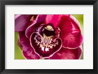 Framed Exotic Orchid 08