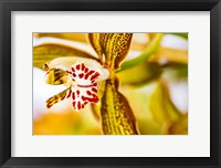 Framed Exotic Orchid 10