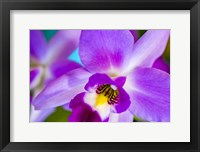 Framed Exotic Orchid 11