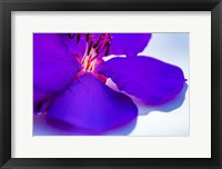 Framed Purple Flower 1
