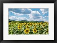 Framed Sunflower Field Against Sky 02