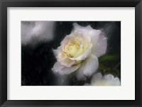 Framed Pink & White Rose
