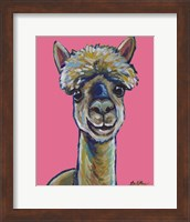 Framed Alpaca Jose Pink