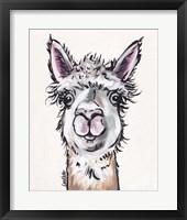 Framed Alpaca Maggie