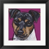 Framed Brazilian Terrier 4