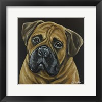Framed Bull Mastiff