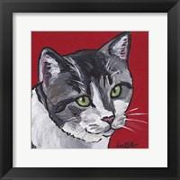 Framed Cat Tabby On Red