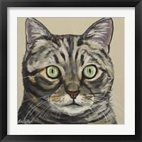 Framed Cat Tabby Ontan