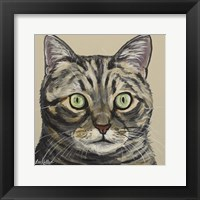 Framed Cat Tabby Ontan