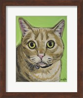 Framed Cat Tabby Wrigley