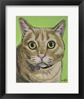 Framed Cat Tabby Wrigley