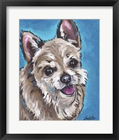 Framed Chihuahua On Blue Expressive
