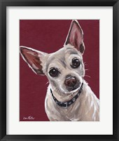 Framed Chihuahua On Red 1