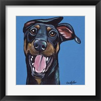 Framed Doberman On Blue