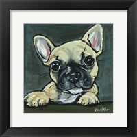 Framed Frenchie Pup 1