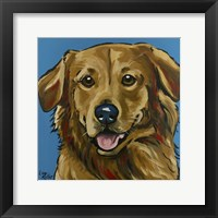 Framed Golden Retriever Expressive Blue