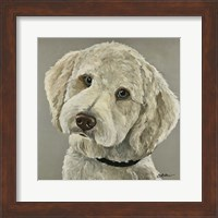 Framed Goldendoodle On Gray
