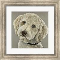 Framed Goldendoodle On Gray