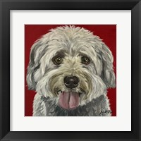 Framed Havanese On Red